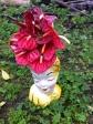 Fuscia flowers in statue